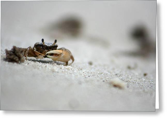 Cedar Key Greeting Cards - Crab 1 Greeting Card by Allan Lovell
