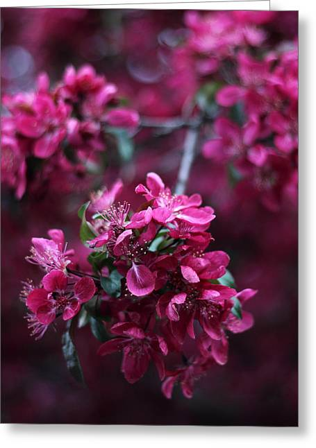 Crab Apple Greeting Cards - Crab Apple Blossom Greeting Card by Jessica Jenney