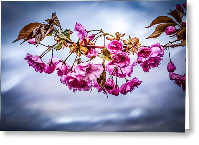 Crab Apple Tree Greeting Card by Bob Orsillo