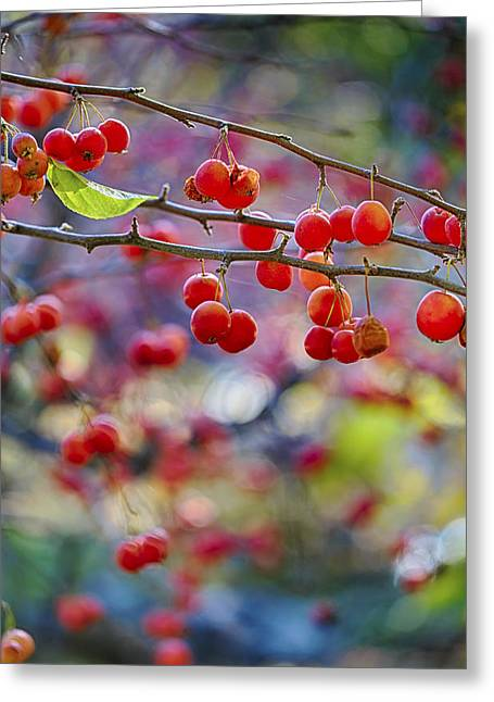 Crab Apples 2 Greeting Card by Scott Campbell