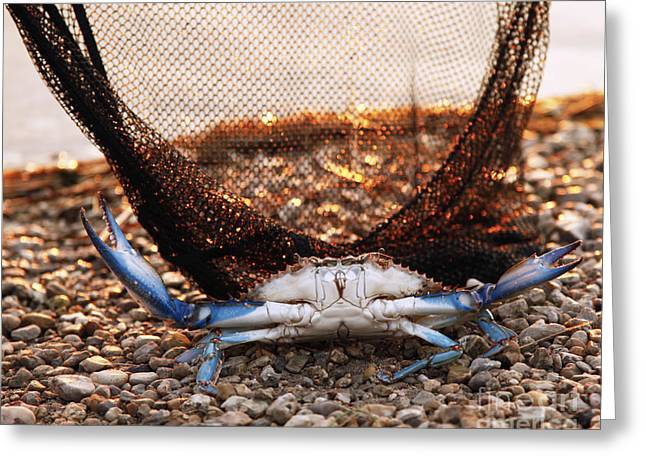 """""""crab Nets"""" Greeting Cards - Crab Can We Talk? Greeting Card by Luana K Perez"""