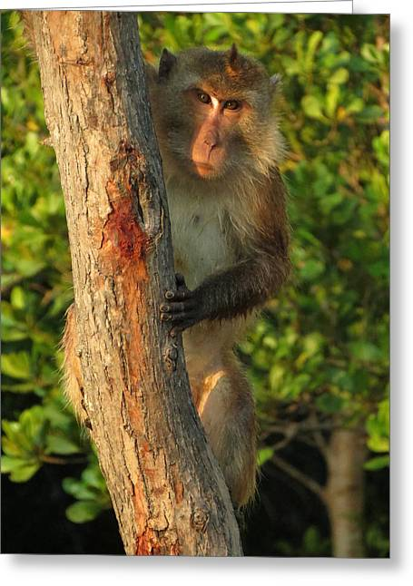 Neutral Colours Greeting Cards - Crab Eating Macaque Greeting Card by Ramona Johnston