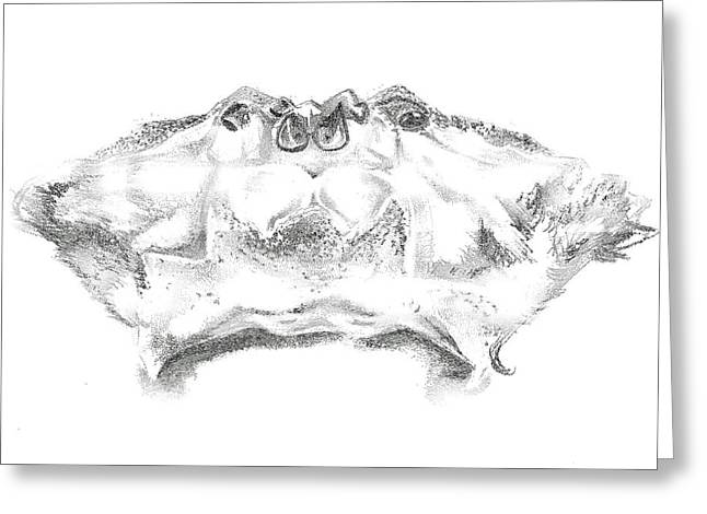 Stippling Drawings Greeting Cards - Crab Exoskeleton Greeting Card by Lucy Loo Wales