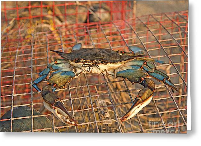 Metal Fish Art Photography Greeting Cards - Crab Got Away Greeting Card by Luana K Perez
