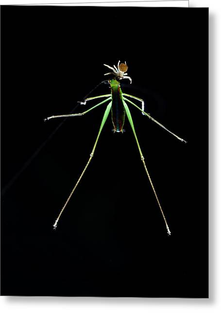 Crab Spider And Katydid Greeting Card by Melvyn Yeo