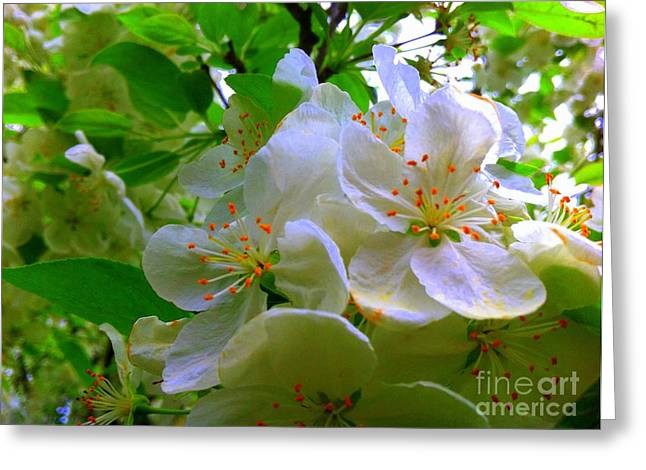 Crabapple Cards Greeting Cards - Crabapple Beauty Greeting Card by Shelia Kempf