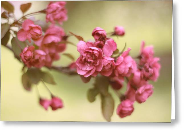 Crab Apple Greeting Cards - Crabapple Blossoms 2 Greeting Card by Jessica Jenney