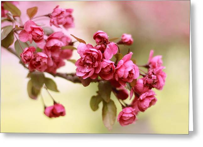 Crab Apple Greeting Cards - Crabapple Blossoms Greeting Card by Jessica Jenney