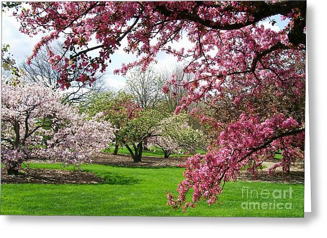 Crabapple Cards Greeting Cards - Crabapple Grove Greeting Card by Laurie Eve Loftin