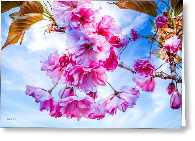 Maine Spring Greeting Cards - Crabapple Impressions Greeting Card by Bob Orsillo