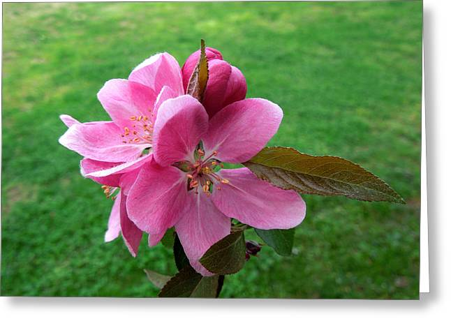 Crabapple Cards Greeting Cards - Crabapple Portrait Greeting Card by Pete Trenholm