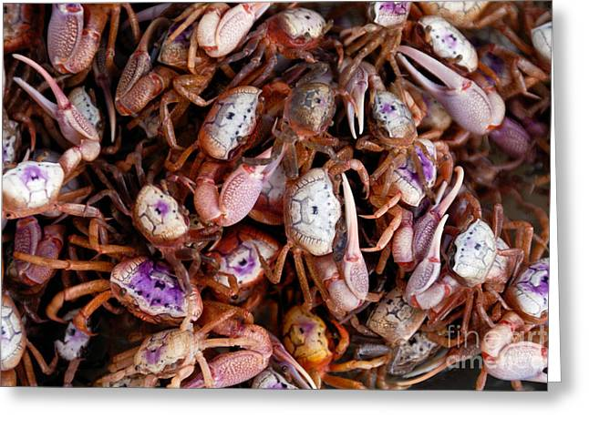 Crab Greeting Cards - Crabs Greeting Card by Amy Cicconi