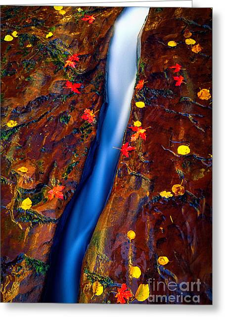 Zion National Park Photographs Greeting Cards - Crack in the Rock Greeting Card by Inge Johnsson