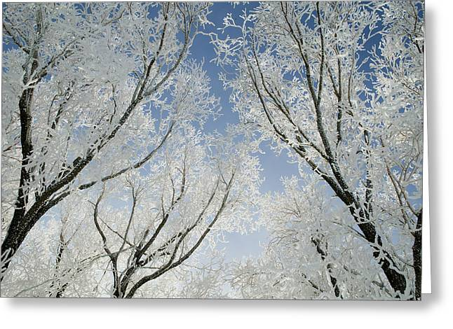 Horizontal Greeting Cards - Crackling Cold Greeting Card by Steve Smith