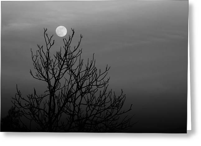 Cradled Moon Greeting Card by Nathaniel Kidd