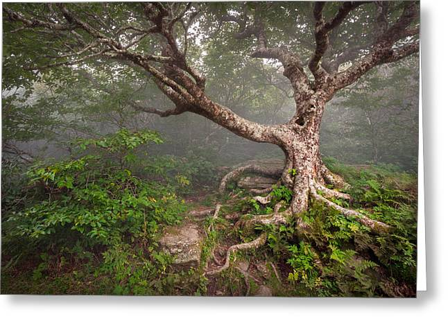Craggy Greeting Cards - Craggy Gardens Blue Ridge Parkway Asheville NC - Enduring Craggy Greeting Card by Dave Allen