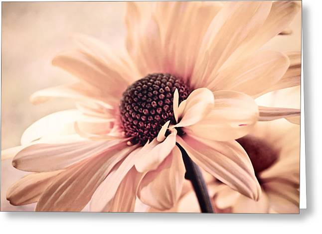 Apricot Greeting Cards - Cranberry Chiffon Greeting Card by Darlene Kwiatkowski