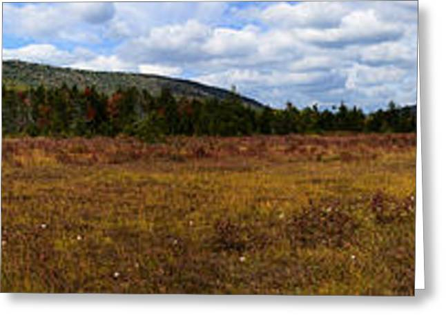 Peat Greeting Cards - Cranberry Glades Autumn Panoramic Greeting Card by Thomas R Fletcher