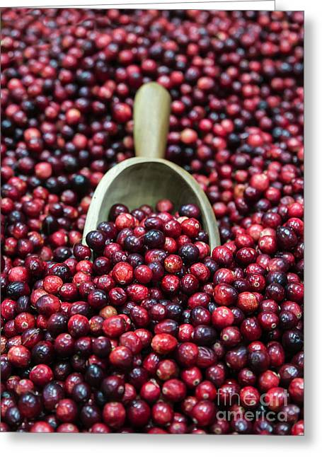 Cranberry Harvest Greeting Card by John Greim