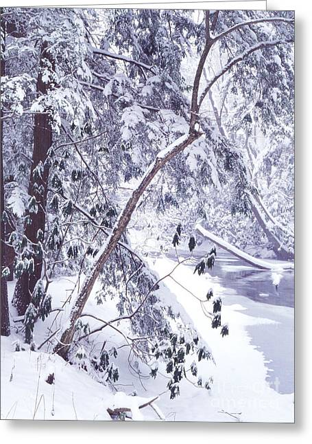 Allegheny Greeting Cards - Cranberry River Deep Snow Greeting Card by Thomas R Fletcher