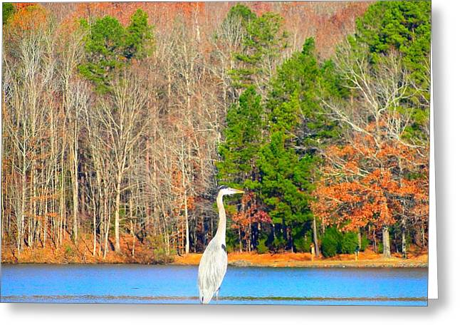 Cane Creek Greeting Cards - Crane and Color Greeting Card by Cindy Croal
