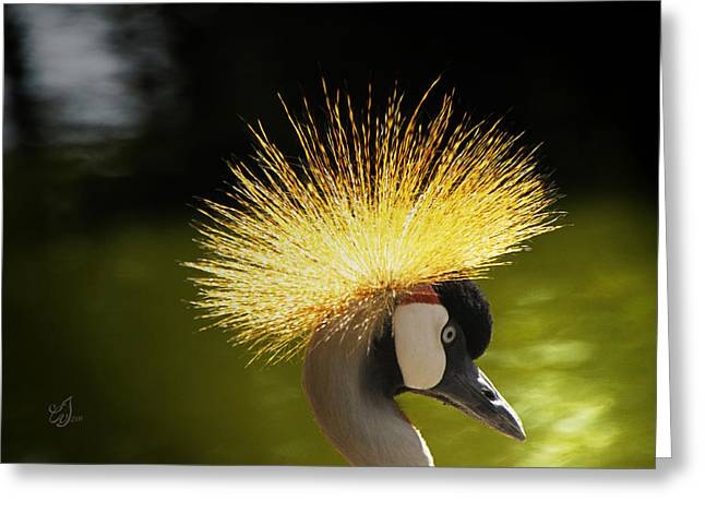 Zoology Greeting Cards - Crane Crown Greeting Card by Music of the Heart