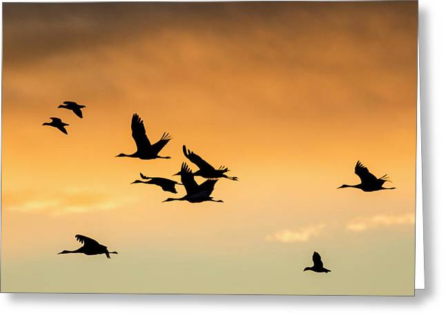 Cranes And Geese Flying, Bosque Del Greeting Card by Maresa Pryor