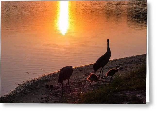 Cranes In Florida Greeting Cards - Cranes at sunset Greeting Card by Zina Stromberg