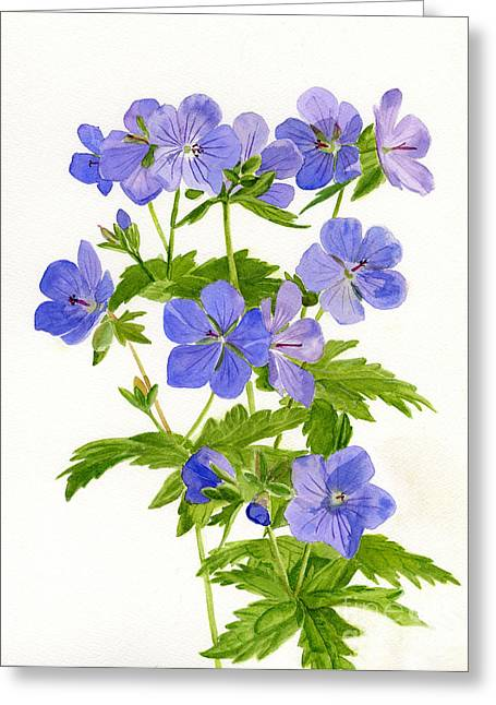 Gloom Greeting Cards - Cranes Bill Wild Geraniums Greeting Card by Sharon Freeman