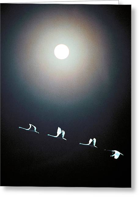 Queue Greeting Cards - Cranes Flying Across The Moon Greeting Card by Panoramic Images