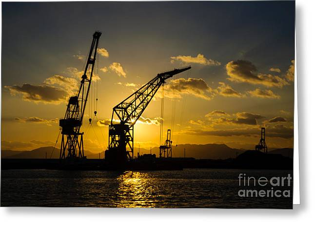 Cranes In The Sunset Greeting Card by David Hill
