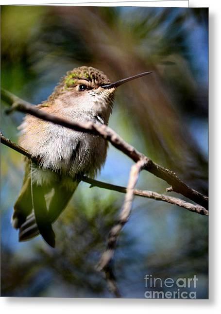 Nature Greeting Cards - Cranky Greeting Card by Deb Halloran