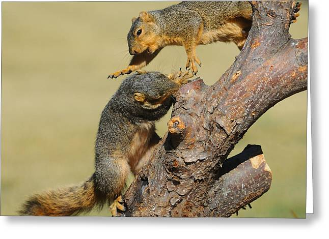 Fox Squirrel Greeting Cards - Cranky Squirrel Greeting Card by Suzanne Rogers