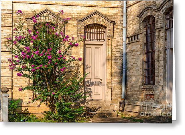 Crape Greeting Cards - Crape Myrtle and Gonzales County Jail Museum Greeting Card by Silvio Ligutti