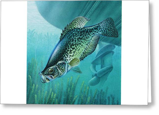 Crappies Greeting Cards - Crappie and Boat Greeting Card by JQ Licensing