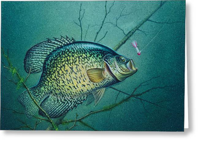 Crappies Greeting Cards - Crappie and Pink Jig Greeting Card by Jon Q Wright