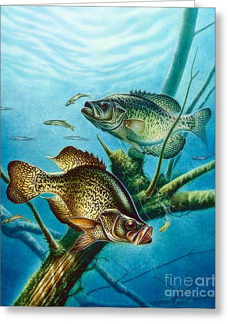 Crappie And Root Greeting Card by Jon Q Wright