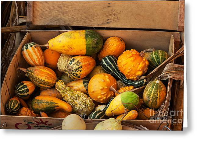 Gift For Photographer Greeting Cards - Crate filled with pumpkins and gourts Greeting Card by Iris Richardson