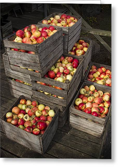 Apple Crates Greeting Cards - Crated Apples Greeting Card by Randall Nyhof