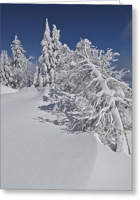 Craters Greeting Cards - Crater Lake Trees 2 Greeting Card by Todd Kreuter