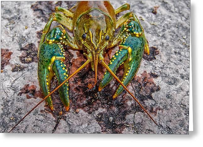 Crayfish Greeting Cards - Crawdad Greeting Card by Ernie Echols