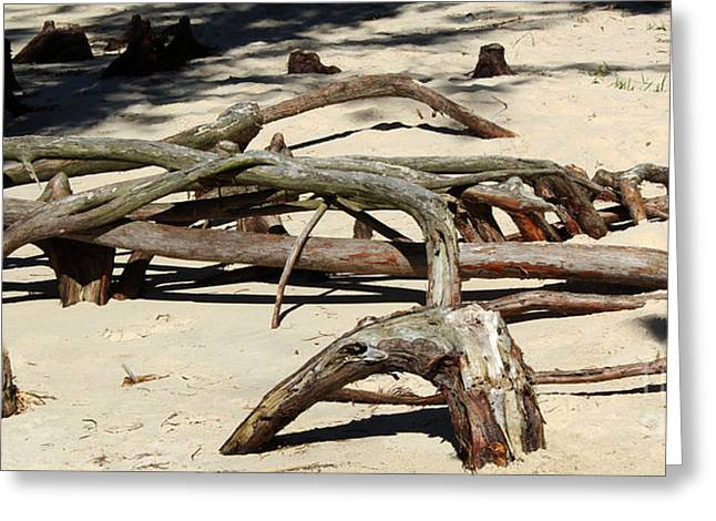 Tree Roots Greeting Cards - Crawling Knees Greeting Card by Steven Parker