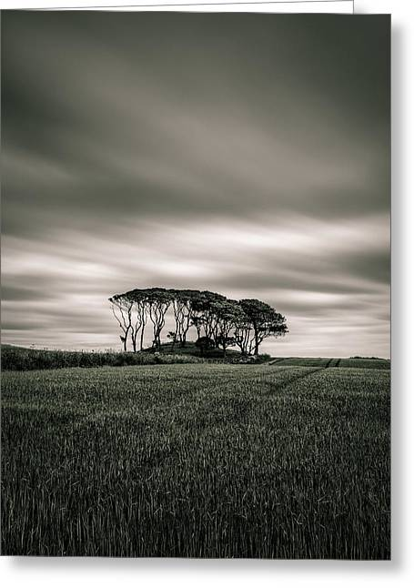 Scottish Landscapes Greeting Cards - Crawton Copse Greeting Card by Dave Bowman