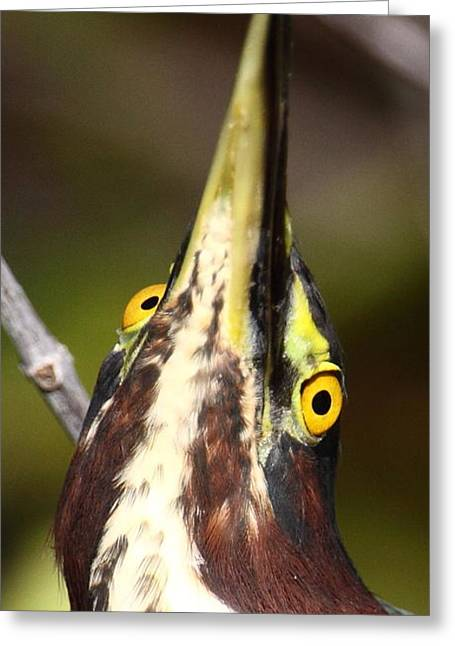 Crazy Eyes Greeting Card by Bruce J Robinson