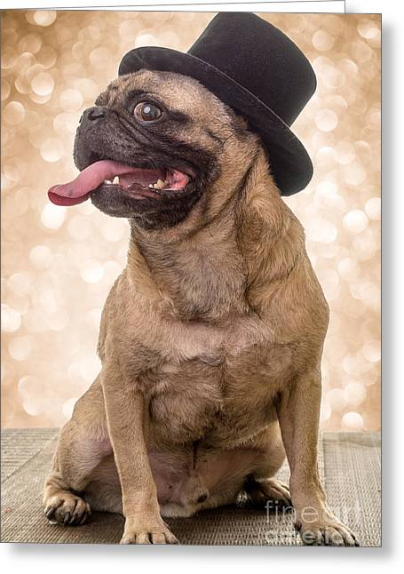 Doggy Cards Greeting Cards - Crazy Top Dog Greeting Card by Edward Fielding