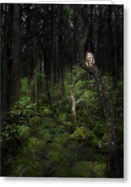 Creature Of The Night Greeting Card by Bill Wakeley