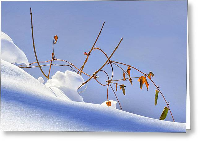 Drifting Snow Greeting Cards - Creek Bank in Winter Greeting Card by Carolyn Derstine