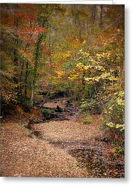 Autumn Scenes Greeting Cards - Creek Bed in Autumn - Fall Landscape Greeting Card by Jai Johnson