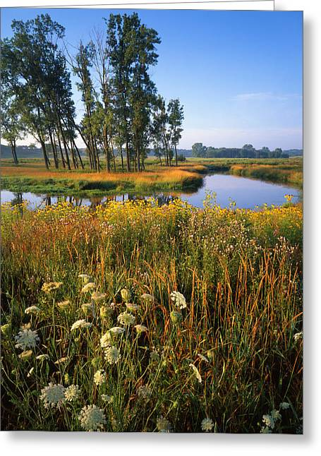 Hack-ma-tack National Wildlife Refuge Greeting Cards - Creek Bend Greeting Card by Ray Mathis