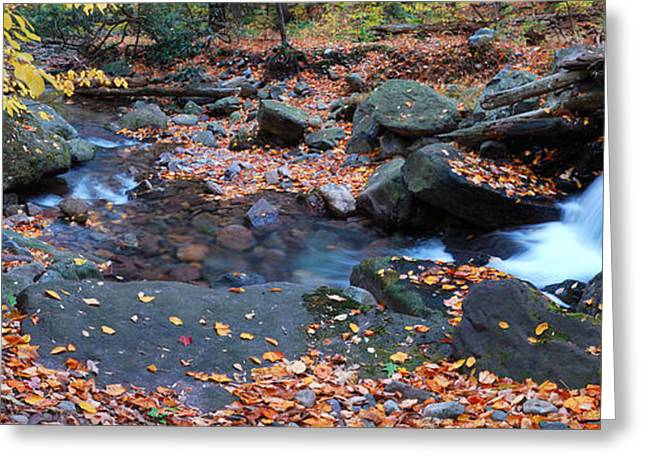 Beautiful Creek Greeting Cards - Creek Foliage Panorama Greeting Card by Songquan Deng